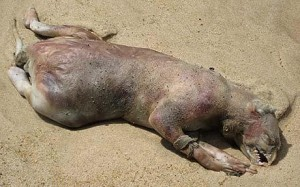 montauk-monster-300x187